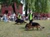 Dzień Dziecka 2008, pokaz tresury psów SOK